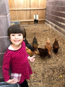 MAevy and chickens